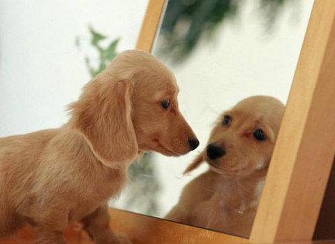 是否盯着镜子里看